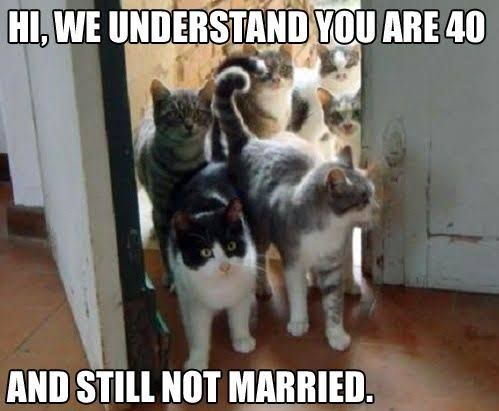 catlady-meme